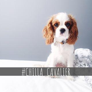 Influencer - Edyta Szyszło  (chilla_cavalier)